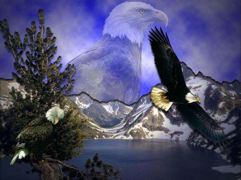 Eagle-vyapaarjagat